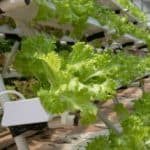 Hydroponic Equipment Online
