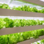 Is Vertical Farming the Future