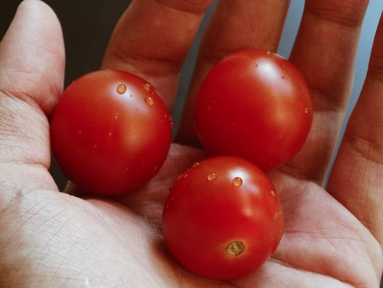 Nutritious Tomatoes